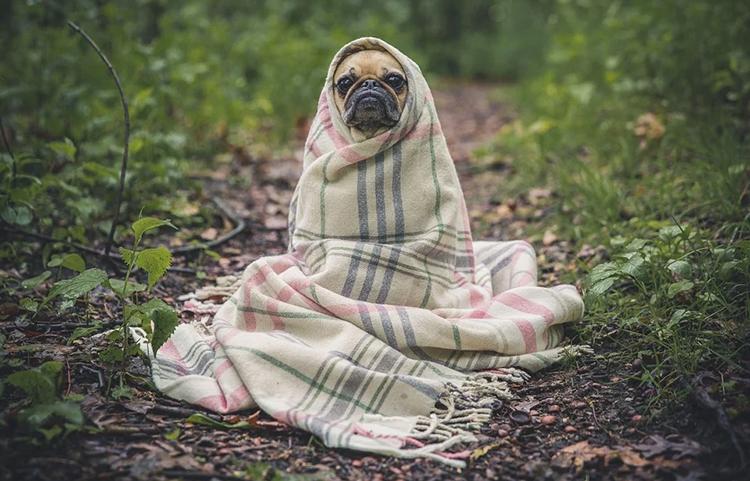 Pro vaginální napářku potřebujete velkou deku.